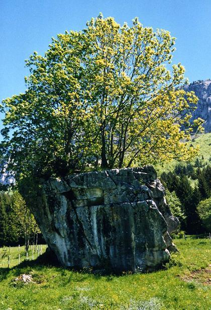 arbreblog.jpg