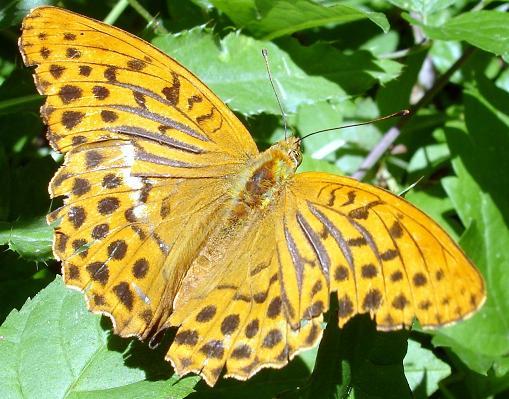 papillonblog.jpg